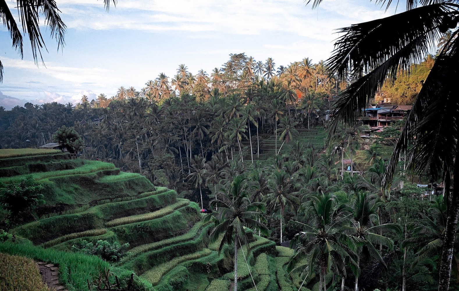 Sawah Terasering di Kawasan Gianyar - Bali