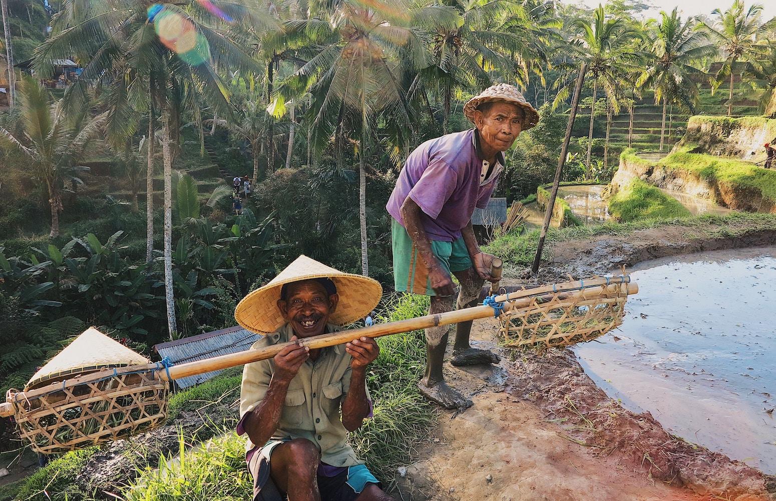 Petani di Sawah Kawasan Ubud - Bali